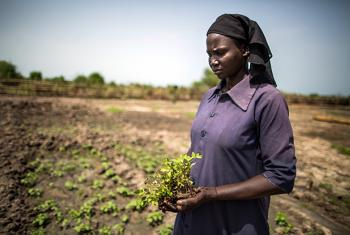 Elizabeth Abraham, a mother of five, holds tomato crops before planting them in a demonstration garden in Bentiu, South Sudan, Saturday 27 May 2017. © UNICEF/UN067923/Gonzalez Farran