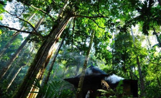 Damar Bosques de Indonesia – Foto ONU:Eva Fendiaspara