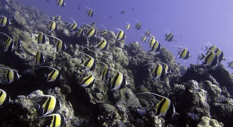 El blanqueamiento coralino afectaría profundamente el ecosistema marino, uno de los más importantes del planeta.