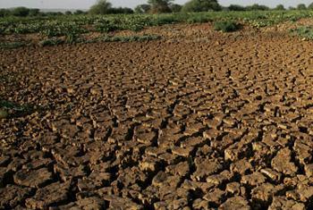 Las consecuencias del cambio climático causan numerosas crisis humanitarias cada año. Foto: FAO.