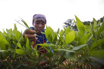 Foto de la portada del nuevo informe sobre el hambre. Foto FAO / Joan Manuel Baliellas.