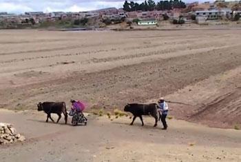 Día Mundial de la Alimentación: Agricultura familiar. Captura de vídeo. FAO