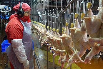 Planta de procesamiento de pollo, Chile. Foto OIEA/P.Pavlicek