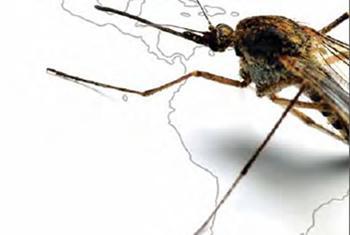 Nuevo informe de la OMS y UNICEF muestra que las muertes por malaria se han reducido 60 por ciento en todo el mundo en 15 años. Foto: OPS.