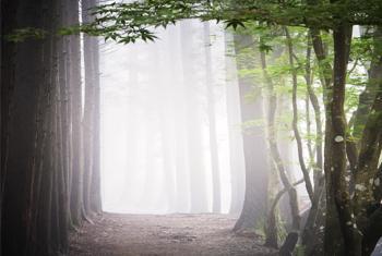 Camino forestal en Bosung, República de Corea. Foto ONU/ Kibae