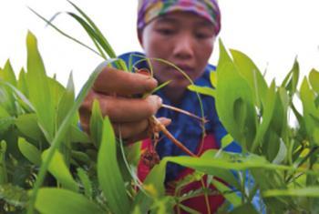 Inseguridad alimentaria en el mundo.Foto: FAO/Joan Manuel Baliellas.
