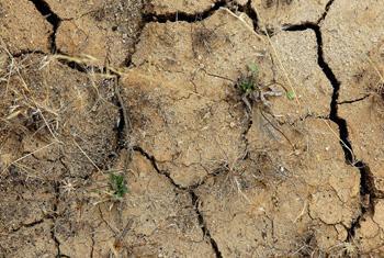 Cada año aumenta la degradación de los suelos en unas 12 millones de hectáreas. Foto: ONU.