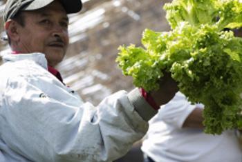 El apoyo a la agricultura familiar y el comercio entre los países de la region, podrían fortalecer la seguridad Alimentaria de América Latina y el Carib. Foto: FAO.