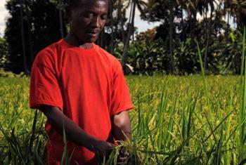 Los pequeños campesinos se destacan entre los primeros en sufrir los perjuicios del cambio climático. Foto: FAO