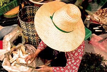 Las comunidades vulnerables, como las indígenas, son de las primeras en verse afectadas por los impactos del cambio climático. Foto: Archivo de la ONU