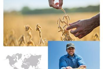 Asegurar un futuro sustentable es uno de los planes de Syngenta, una multinacional de origen Suizo con sucursal en Paraguay. Foto: captura de pantalla del website www.syngenta.com