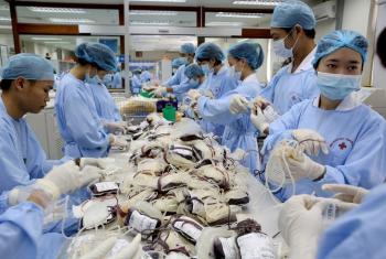 Técnicos de salud procesan y organizan sangre donada en Hanoi, Viet Nam. Foto: Banco Mundial/Dominic Chavez