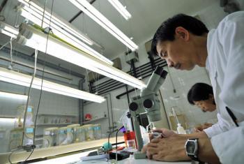 Científicos trabajando en la Técnica del Insecto estéril. Foto: OIEA
