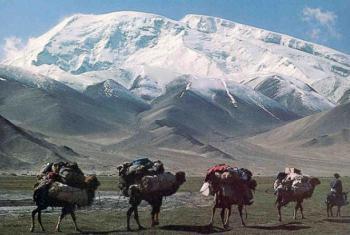Caravana de camellos transitan por los ramales inmemoriales de la Ruta de la Seda. Foto UNESCO.