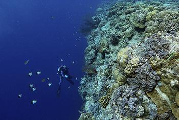 Enric Sala explore un recif de corail à Palau. (