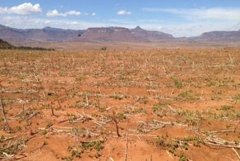 Des terres stériles en raison de la sécheresse provoquée par El Niño au Lesotho, en Afrique australe. Photo : FAO