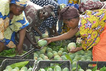 Tri de mangues dans une ferme gérée par des femmes au Mali.