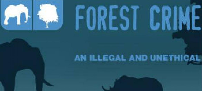 Combate aos Crimes Florestais e Vida Selvagem. Imagem: Unodc