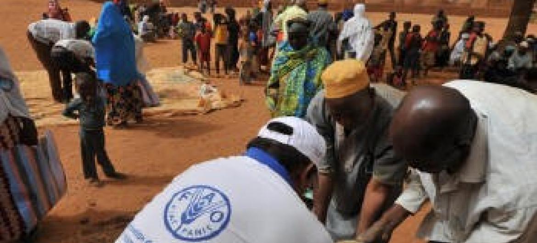 Tentativas para atender necessidades dos refugiados. Foto: FAO.