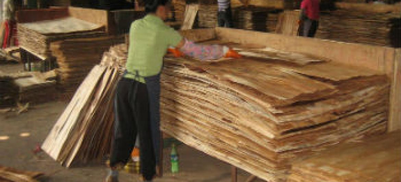 Produção de paineis de madeira na China. Foto: FAO