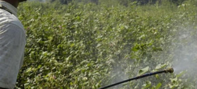 Campanha de busca de pesticidas obsoletos deve ser concluída até outubro. Foto: FAO/Asim Hafeez