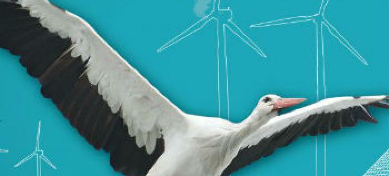Dia Mundial das Aves Migratórias. Imagem: Pnuma