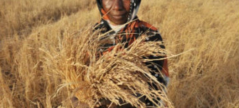 Estado da Insegurança Alimentar no Mundo. Foto: FAO