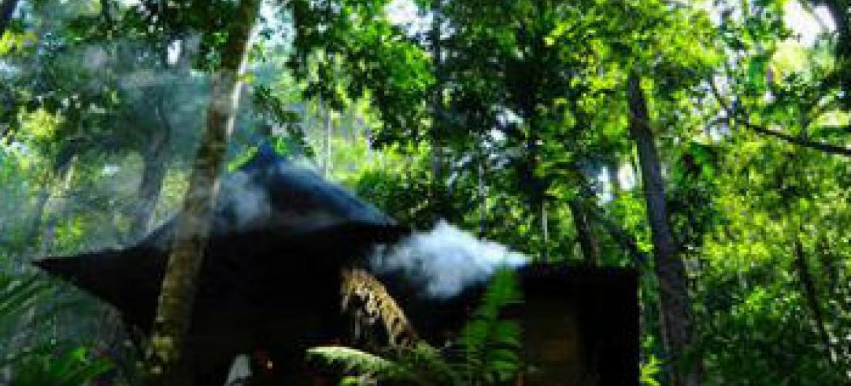 Fórum das Nações Unidas sobre Florestas. Foto: ONU/Desa