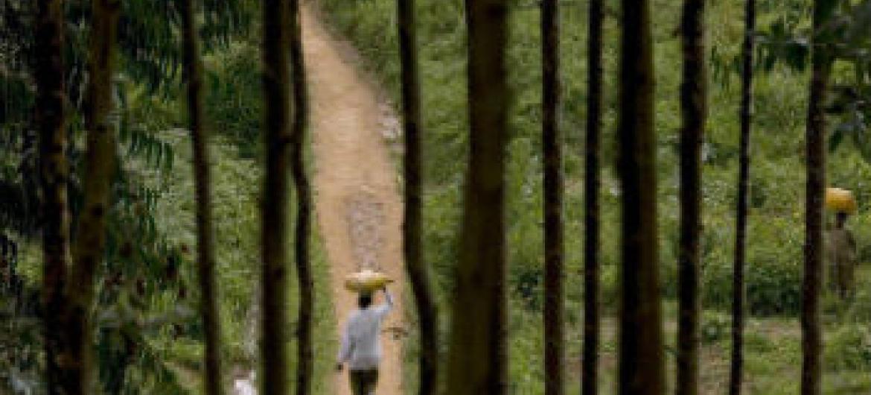 Parceria vai promover o manejo sustentável das florestas. Foto: FAO/Giulio Napolitano