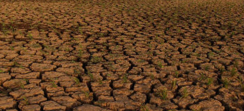Dia Mundial de Combate à Desertificação e à Seca.Foto: Banco Mundial/Arne Hoel