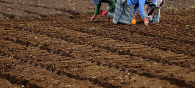 As mulheres da zona rural são afetadas de forma desproporcional pela pobreza e insegurança alimentar. Foto: Maria Fleischmann / Banco Mundial.