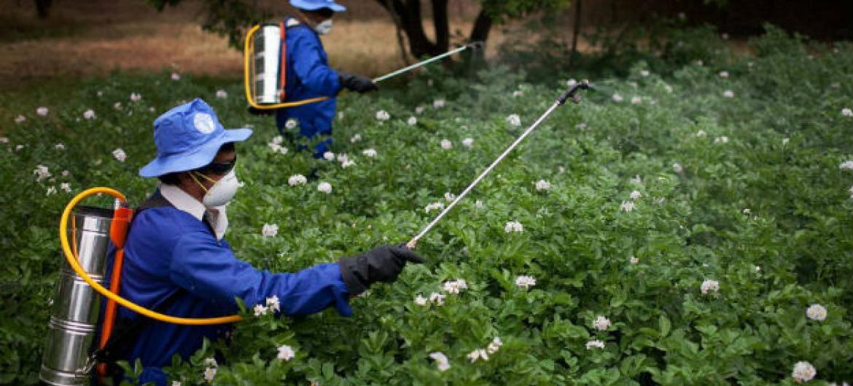 Nova versão das diretrizes sobre a legislação e a rotulagem dos pesticidas.Foto: FAO/Danfung Dennis