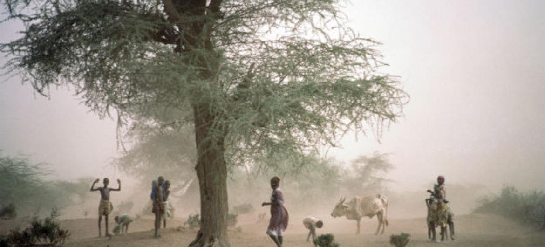 O Banco Mundial cita a seca atual, que levou a prejuízos nas colheitas, morte de rebanhos e aumento da insegurança alimentar. Foto: ONU/Ray Witlin
