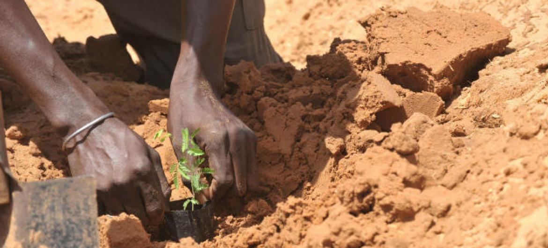 Agricultor em plantação no Senegal. Foto: FAO/Seyllou Diallo