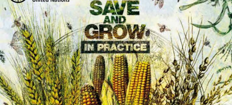 Foto: Reprodução publicação FAO