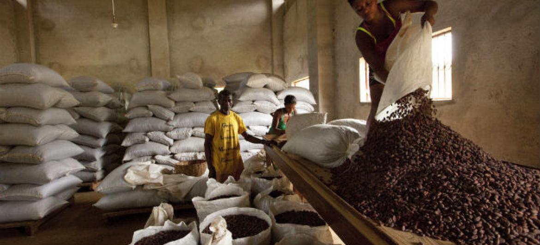 Crescimento do PIB de São Tomé e Príncipe se deve, em parte, à recuperação da produção do cacau. Foto: Ifad/Susan Beccio