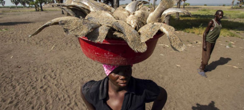 A pesca fornece 17% de toda a proteína animal consumida no mundo.Foto: FAO