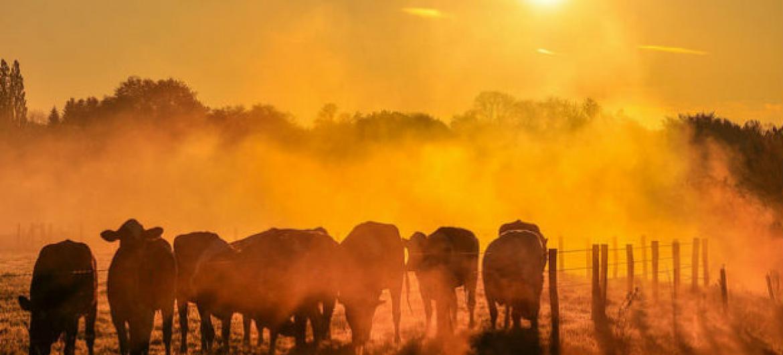 Em várias partes do mundo, houve períodos de calor extraordinário.