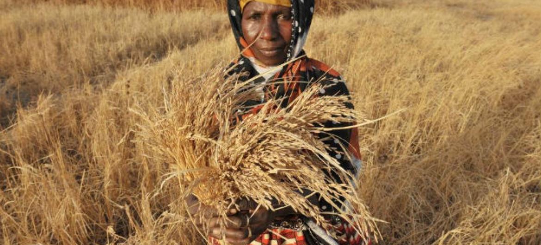 Agricultora em África. Foto: FAO/Seyllou Diallo