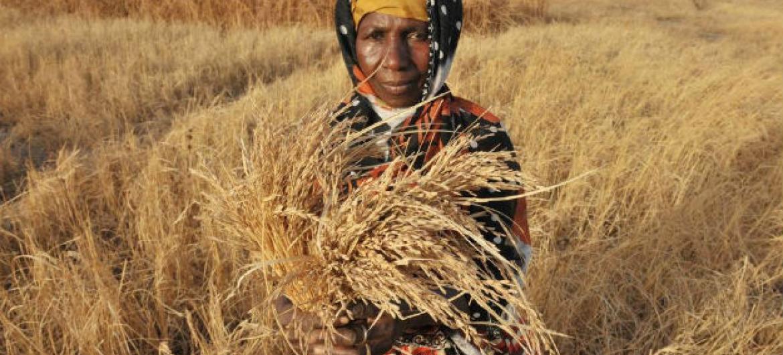 Cerca de 1,5 milhão de pessoas estão em situação de insegurança alimentar em Moçambique.Foto: FAO/Seyllou Diallo