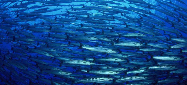 FAO destaca nova era nos esforços para combater a pesca ilegal.Foto: FAO