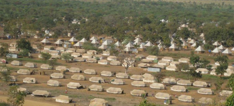 """Número crescente de refugiados e deslocados muitas vezes """"coloca pressão em florestas devido ao aumento da demanda por combustível de biomassa"""". Foto: FAO"""
