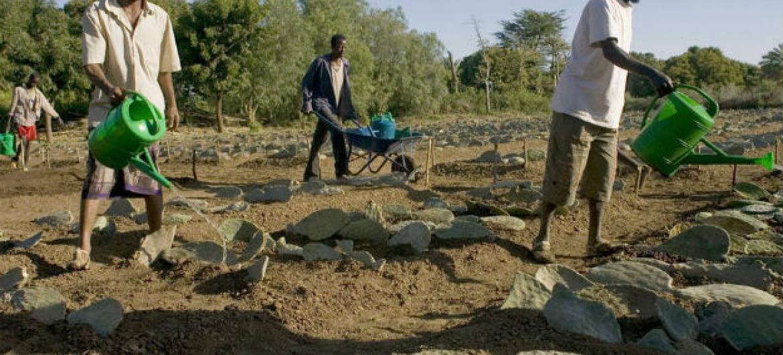 Distribuição de sementes ajuda agricultores na Etiópia. Foto: FAO/Giulio Napolitano