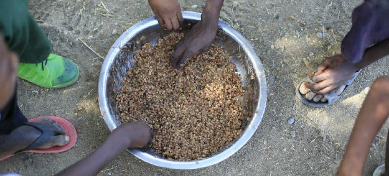 Escassez iniciou mais cedo no Sahel. Foto: PMA