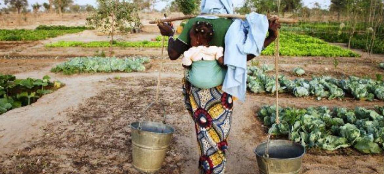 A agência da ONU disse que o norte da África e o oeste da Ásia estão entre as regiões mais secas do mundo. Foto: FAO/Giulio Napolitano