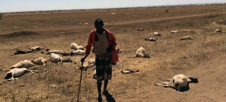 Pastoreio no norte da Somália, região fortemente atingida pela seca. Ele perdeu quase metade de seu rebanho, que contava com 70 animais. Foto: Unicef/Sebastian Rich