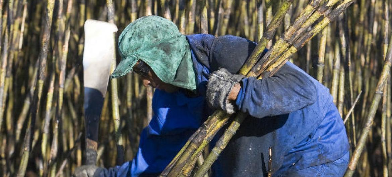 Plantação de cana-de-açúcar no Brasil. Foto: ONU/Eskinder Debebe (arquivo)