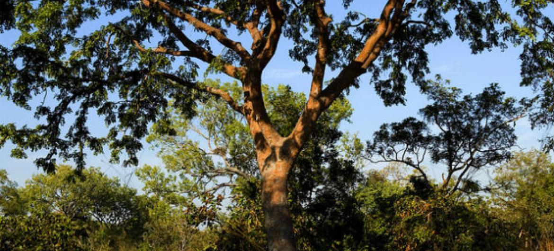 A agência da ONU quer promover uma maior integração das florestas com atividades agrícolas sustentáveis.