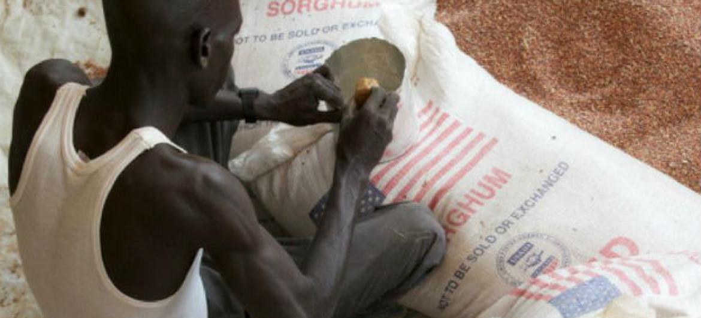 PMA espera fazer entregas de comida no fim de semana em Baggari.