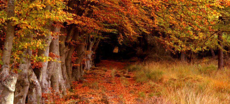 Floresta de Selm Muir, na Escócia. Foto: ONU/Robert Clamp